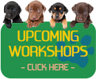Paw Perspectives' Workshops
